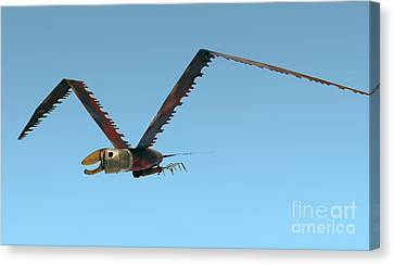 Canvas Print featuring the photograph Saw Bird -raptor by Bill Thomson