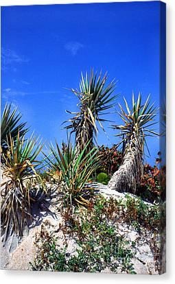 Saw Palmetto Canaveral National Seashore Canvas Print