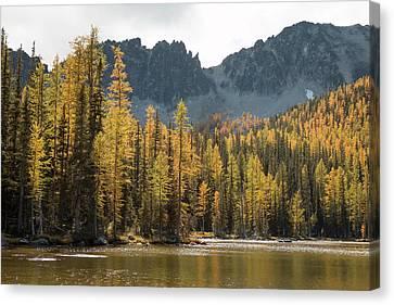 Lake Chelan Canvas Print - Sawtooth Larches II by Ryan McGinnis
