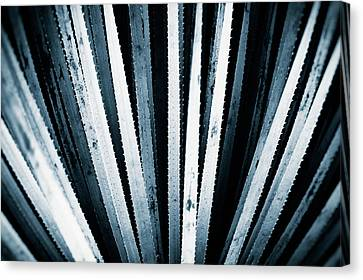 Mitchell Canvas Print - Sawtooth by Scott Norris