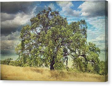 Oak Canvas Print - Say A Little Prayer by Laurie Search