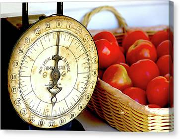 Scale And Tomatos Canvas Print