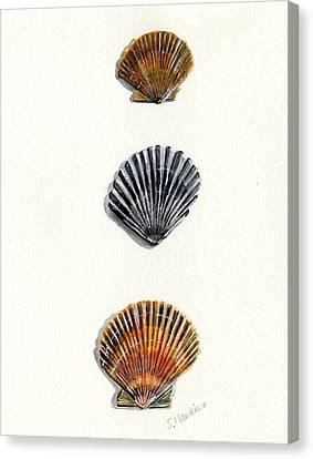 Scallop Shell Trio Canvas Print by Sheryl Heatherly Hawkins