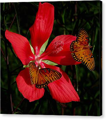 Canvas Print featuring the photograph Scarlet Beauty by Peg Urban