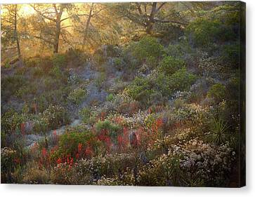 Canvas Print featuring the photograph Scarlet Larkspur At Sunset by Alexander Kunz