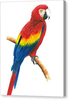 Scarlet Macaw Canvas Print by Christopher Cox