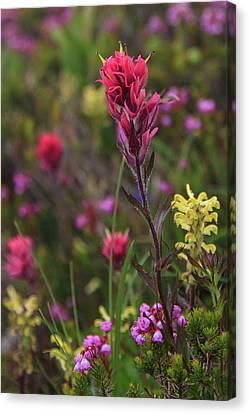 Canvas Print featuring the photograph Scarlet Paintbrush by David Chandler
