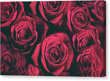 Canvas Print featuring the photograph Scarlet Roses by Jessica Jenney