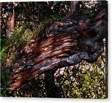 Scarred Canvas Print by Christopher Holmes