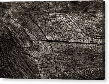 Scars Of Life Canvas Print by Olga Olay