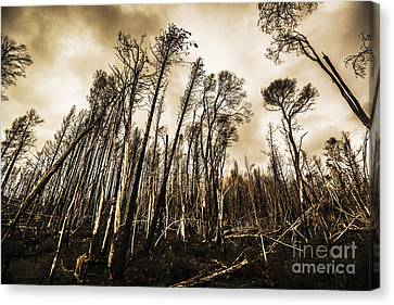 Scary Charcoal Forest  Canvas Print by Jorgo Photography - Wall Art Gallery