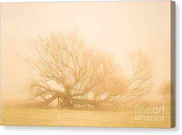 Scary Tree Scenes Canvas Print by Jorgo Photography - Wall Art Gallery
