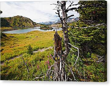 Scenic Alpine Lake And Meadow Canvas Print by George Oze