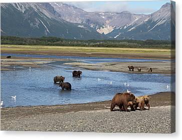 Scenic Bears Canvas Print by David Wilkinson