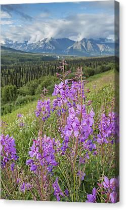 Matanuska Canvas Print - Scenic View Of Landscape Near Palmer by Remsberg Inc