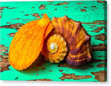 Schallop Seashell And Snail Shell Canvas Print by Garry Gay