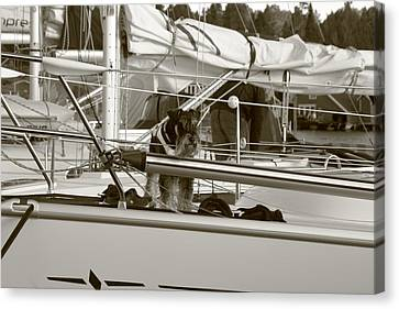 Standard Schnauzer Canvas Print - Schanuzer Dog On A Yacht - Monochrome by Ulrich Kunst And Bettina Scheidulin