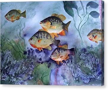 School's Out - Bluegills Canvas Print by Audrey Bunchkowski
