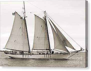 Schooner Harvey Gamage Of Islesboro Maine Canvas Print by Dustin K Ryan