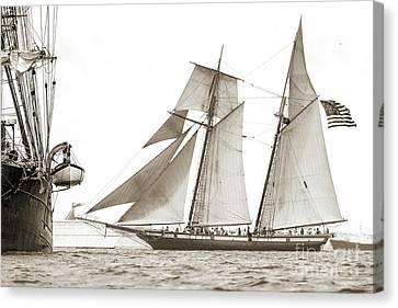 Canvas Print - Schooner Lynx Full Sail by Dustin K Ryan