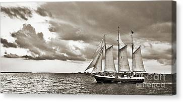 Schooner Pride Tallship Charleston Sc Canvas Print by Dustin K Ryan