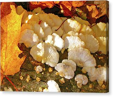 Schrooms And Shadows Canvas Print by Randy Rosenberger