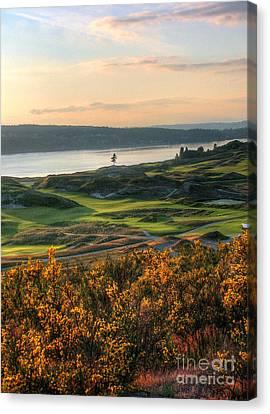 Scotch Broom -chambers Bay Golf Course Canvas Print