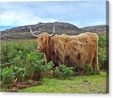 Scottish Highland Cow Canvas Print