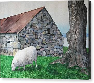 Scottish Sheep Canvas Print by Sharon Farber