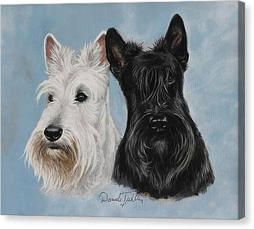 Scottish Terrier Canvas Print by Daniele Trottier