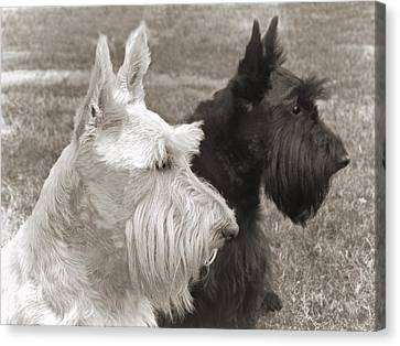 Scottish Dog Canvas Print - Scottish Terrier Dogs In Sepia by Jennie Marie Schell