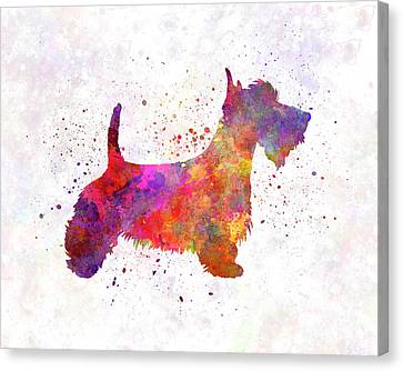 Scottish Terrier In Watercolor Canvas Print by Pablo Romero