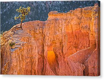 Scrappy Little Tree - Bryce Canyon National Park Photograph Canvas Print by Duane Miller