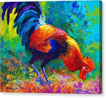 Scratchin - Rooster Canvas Print by Marion Rose
