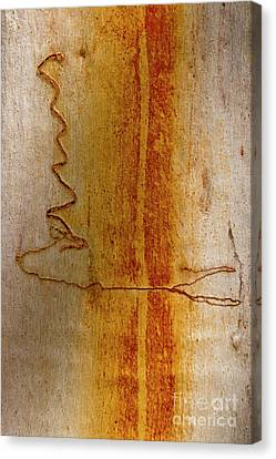 Canvas Print featuring the photograph Scribbly Gum Bark by Werner Padarin