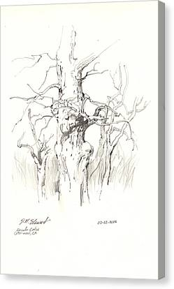 Canvas Print featuring the drawing Scrub Oaks In Cottonwood by John Norman Stewart
