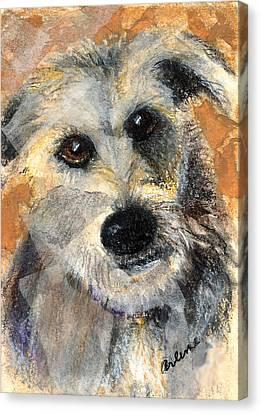Scruffy Canvas Print by Arline Wagner
