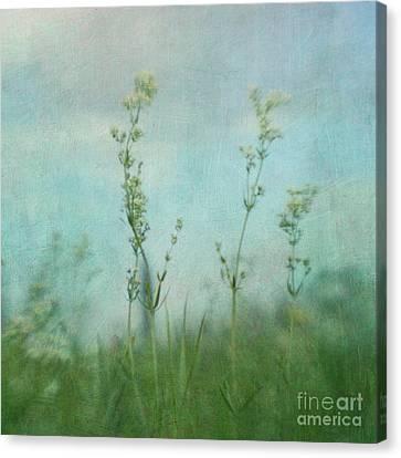 Summer Meadow Poem 3 Canvas Print