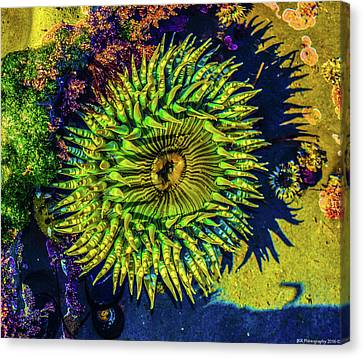 Sea Anemone Canvas Print
