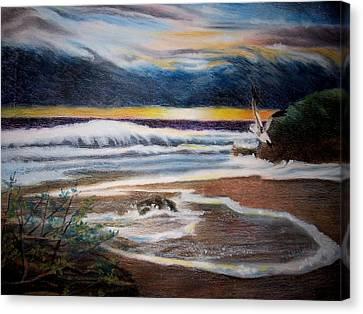 Sea Bird Canvas Print by Kathleen Romana