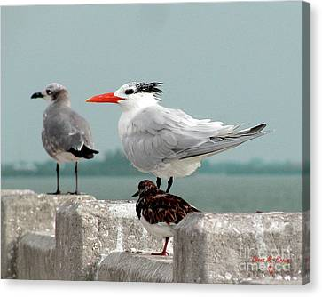 Canvas Print featuring the photograph Sea Birds by Donna Brown