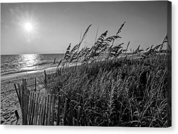 Sea Breeze Canvas Print by John Harding