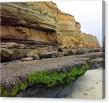 Sea Cliff Canvas Print by Betty Buller Whitehead