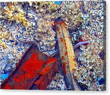 Sea. Corals. Rusty Iron And Little Moray.  Canvas Print by Andy Za