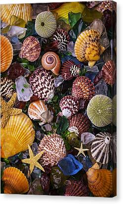 Sea Glass With Sea Shells Canvas Print by Garry Gay