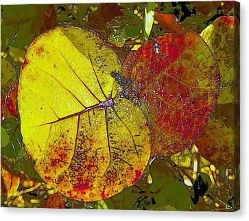 Sea Grape Leafs Canvas Print by David Lee Thompson