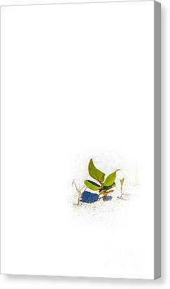 Sea Weed Canvas Print - Sea Grape by Marvin Spates