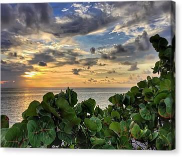 Sea Grape Sunrise Canvas Print