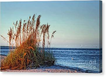 Sea Grass View Canvas Print by Gina Cormier