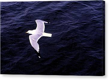 Canvas Print featuring the photograph Sea Gull Over Water Dbwc by Lyle Crump